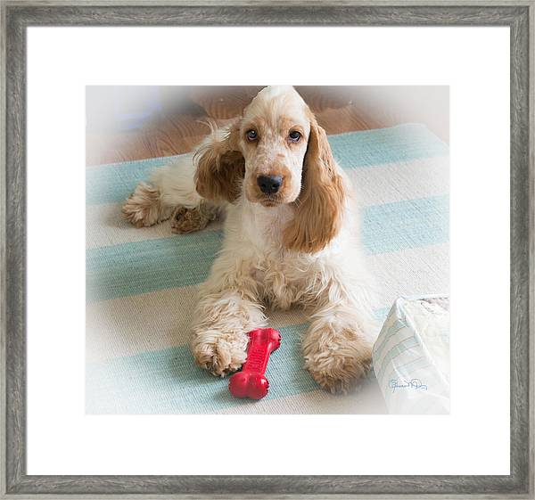 English Cocker Spaniel - Orange Roan Color Framed Print