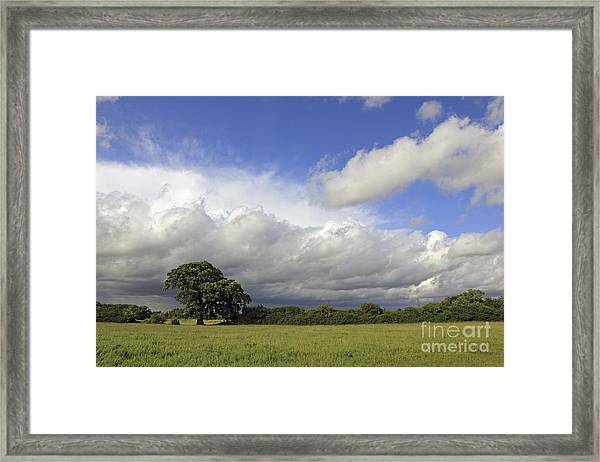 English Oak Under Stormy Skies Framed Print