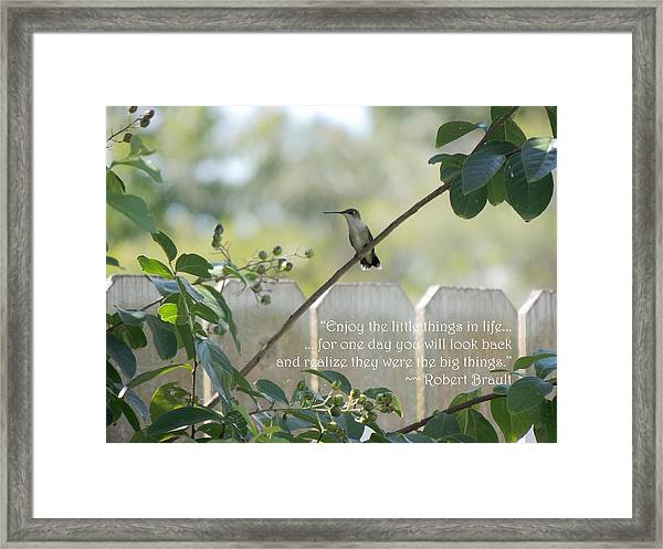Hummingbird On Crepe Myrtle Framed Print