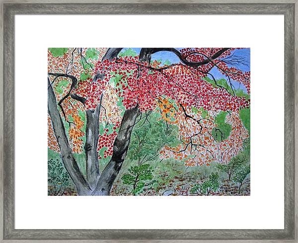 Enjoying Lost Maples Framed Print