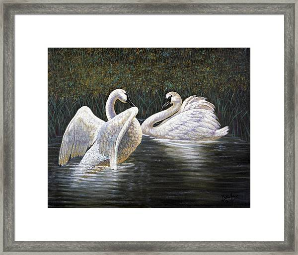 Enjoying The Trumpeter Swans Framed Print