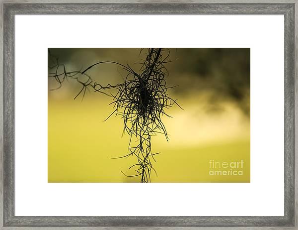 Entanglement Framed Print by Mina Isaac