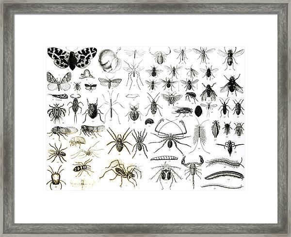 Entomology Myriapoda And Arachnida  Framed Print