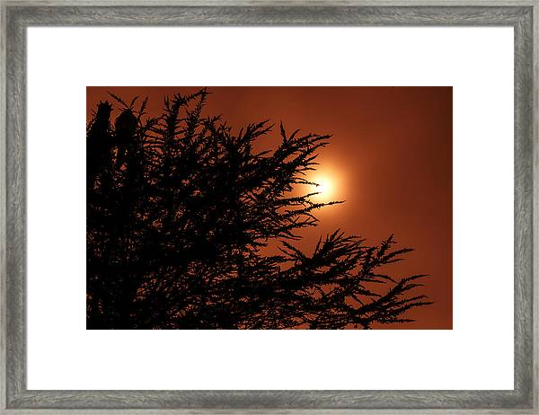 Entropy  Framed Print