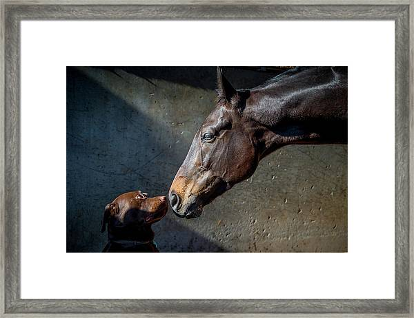 Equine Meets Canine Framed Print