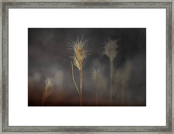 Escape Into The Background Framed Print