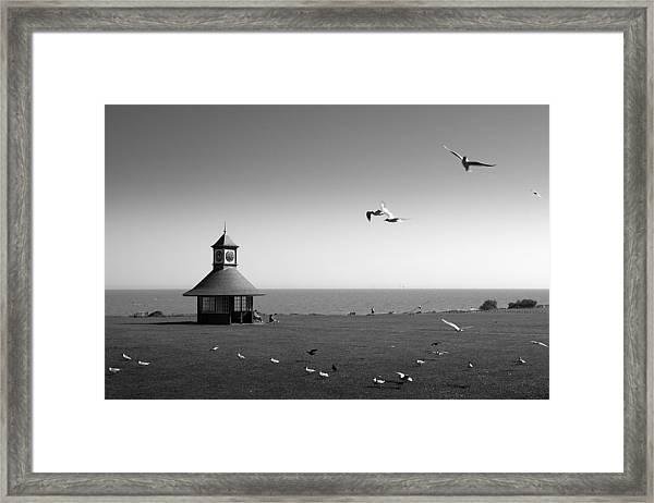 Esplended Gulls Framed Print