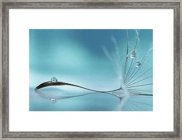 Essence Of Life Framed Print