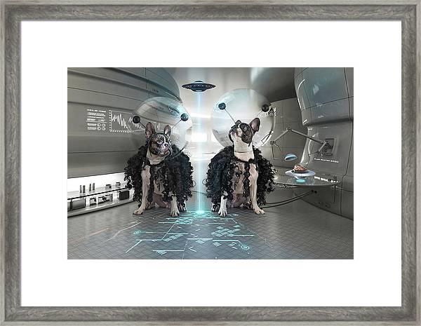 Et Dogs Framed Print