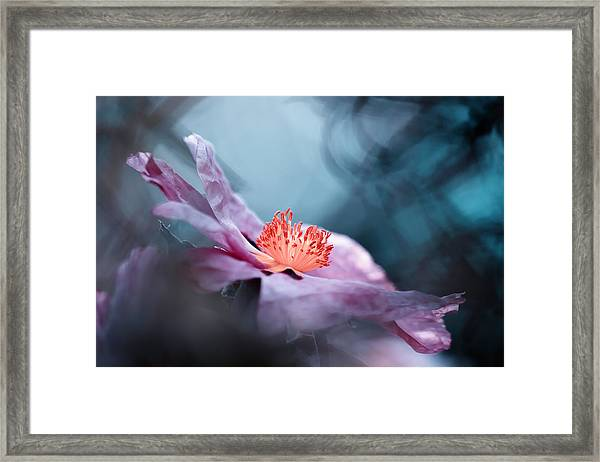Even Flowers Have Stories To Tell Framed Print by Fabien Bravin