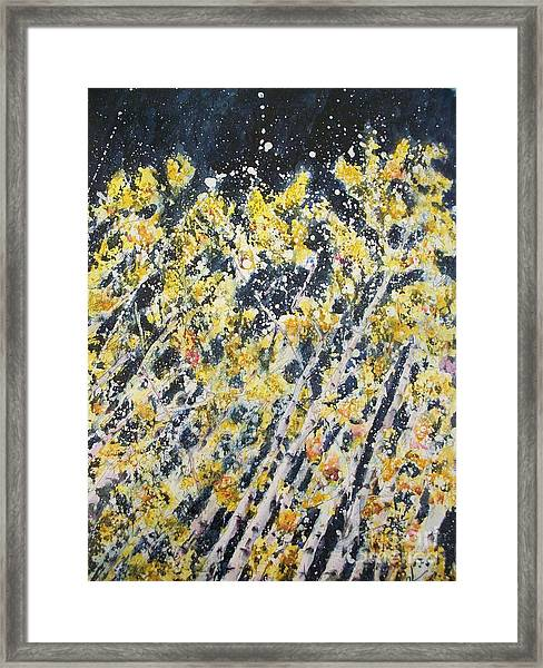 Evening Aspens Framed Print