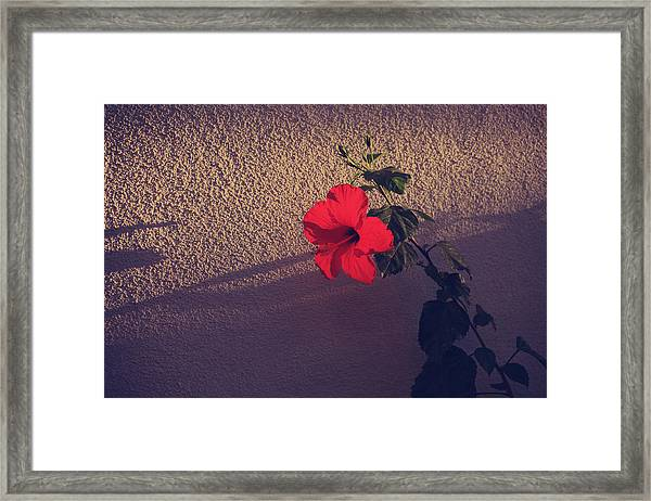 Evening Comes Softly Framed Print