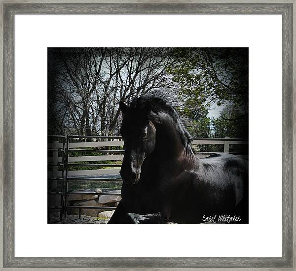 Evening Grace Framed Print