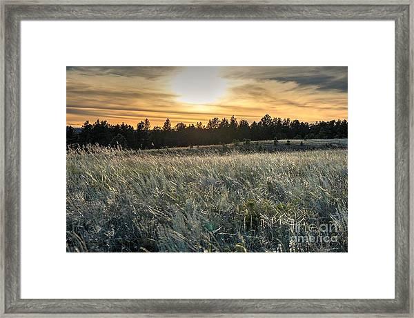 Evening Grasses In The Black Hills Framed Print