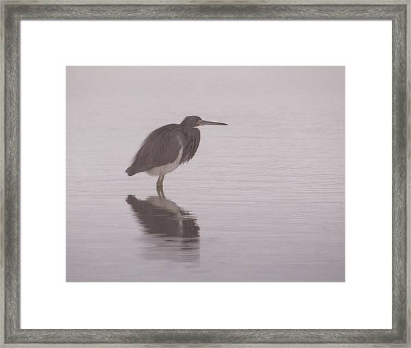 Evening Heron Framed Print