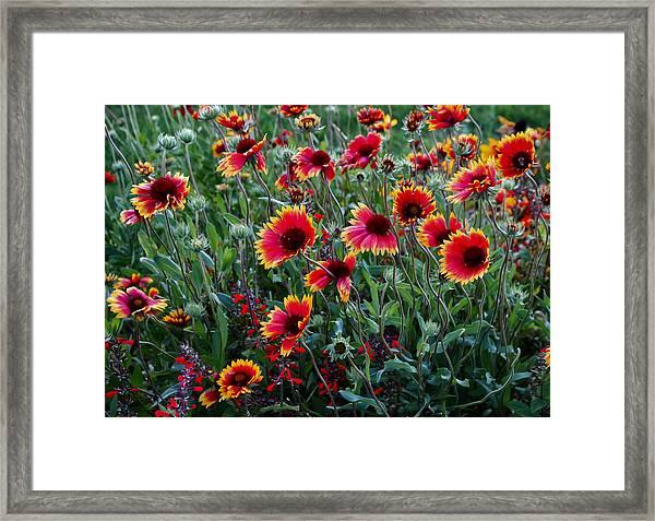 Evening In Bloom Framed Print
