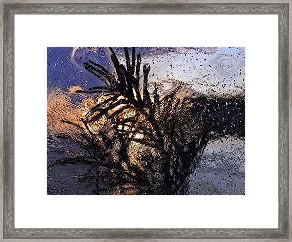 Evening Plant Framed Print
