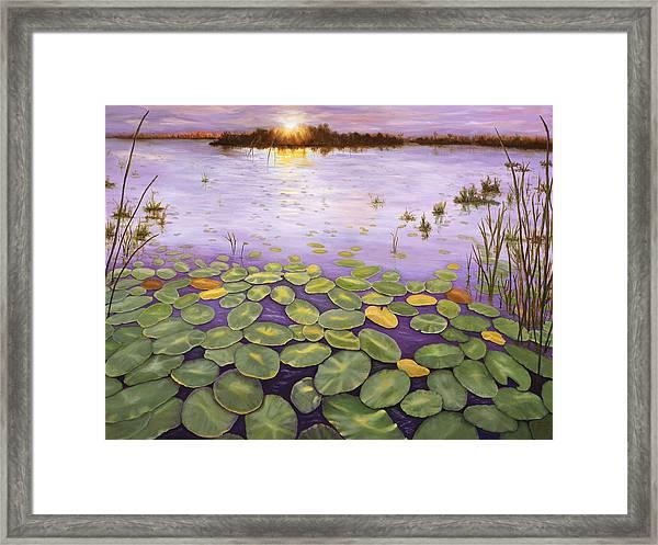 Everglades Evening Framed Print