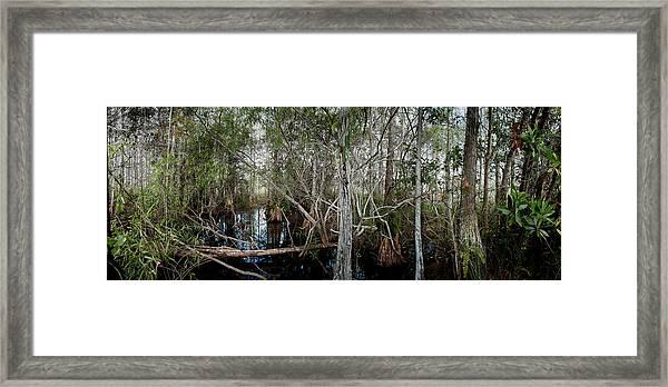 Everglades Swamp-1 Framed Print