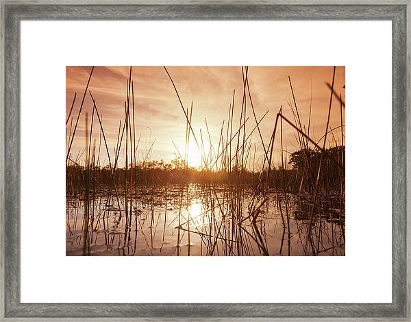 Everglades Swamp At Sunset Framed Print