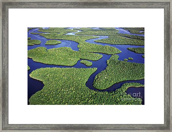 Everglades Waterways Framed Print