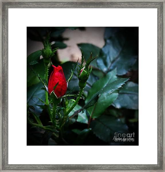 Every Rose Has A Thorn Framed Print by Jinx Farmer