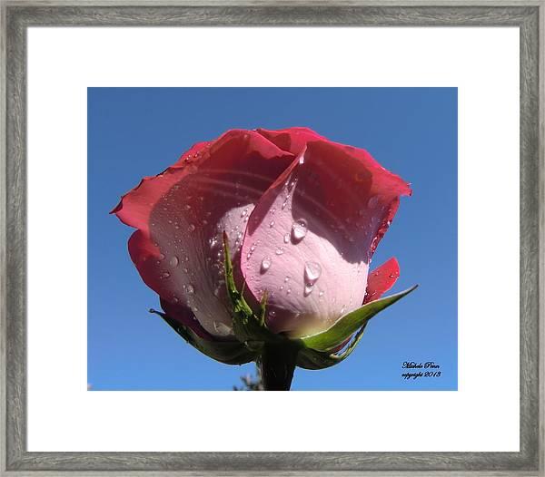 Excellence Centered  Framed Print