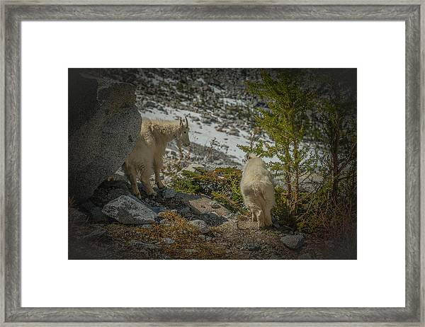 Exhibit Framed Print