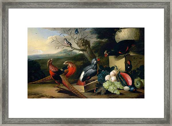Exotic Birds Framed Print