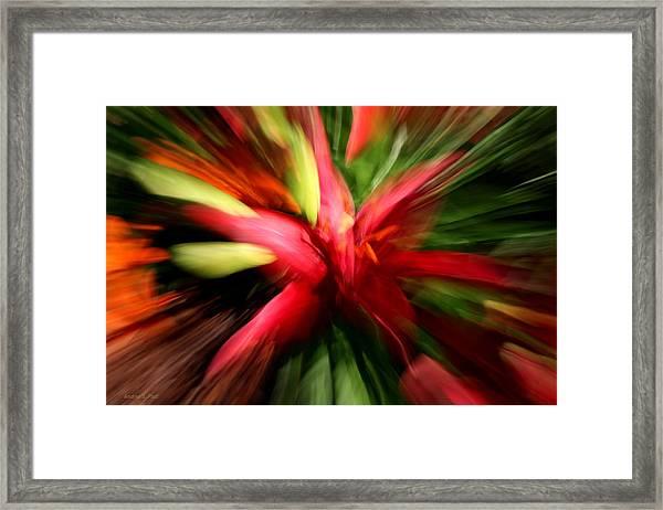 Exploding Lily Framed Print
