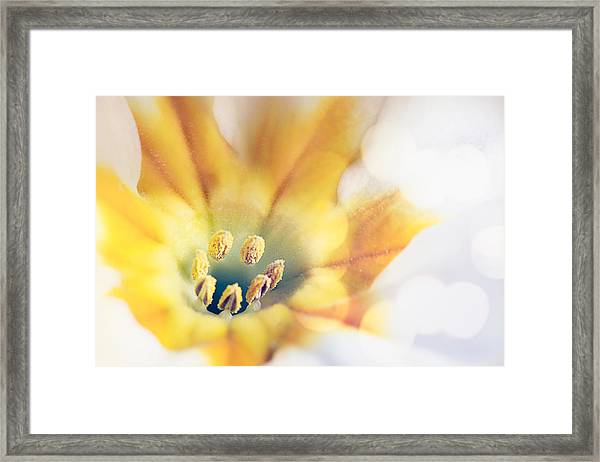 Extreme Close-up Of Flower Pollen Framed Print by Massimiliano Ranauro / EyeEm