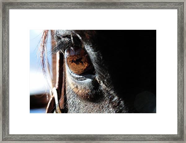 Eyeball Reflection Framed Print