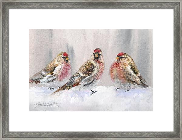 Snowy Birds - Eyeing The Feeder 2 Alaskan Redpolls In Winter Scene Framed Print