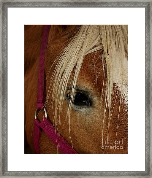 Eyeing You Framed Print