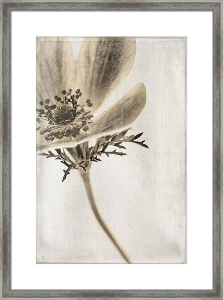 Faded Memory Framed Print