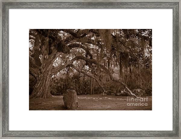 Fairchild Oak Framed Print