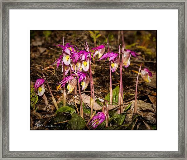 Fairy Slippers Framed Print