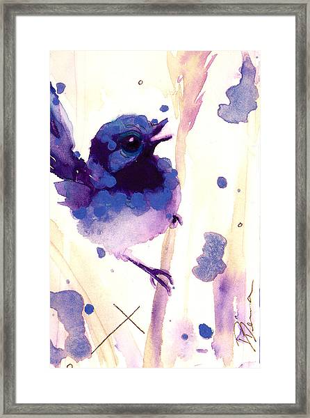 Fairy-wren Framed Print