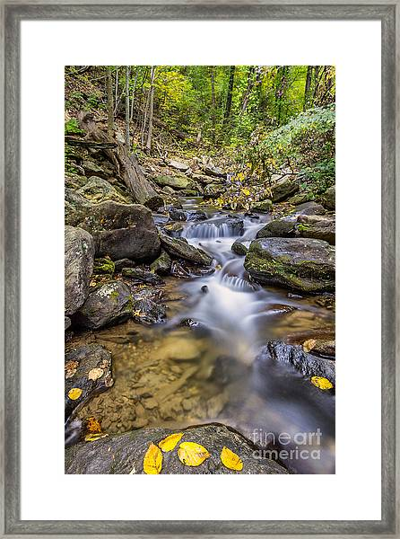 Fall Arrives At Amicalola Falls Framed Print