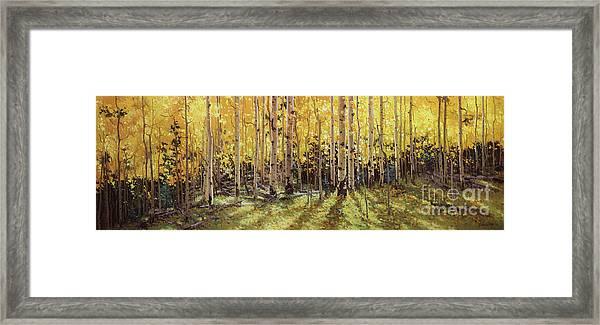 Fall Aspen Panorama Framed Print