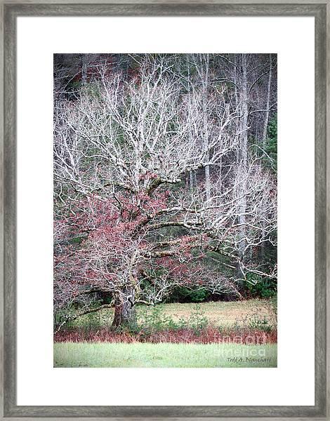 Fall At Cades Cove Framed Print