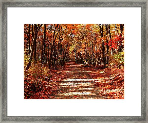 Fall At Cheesequake Framed Print