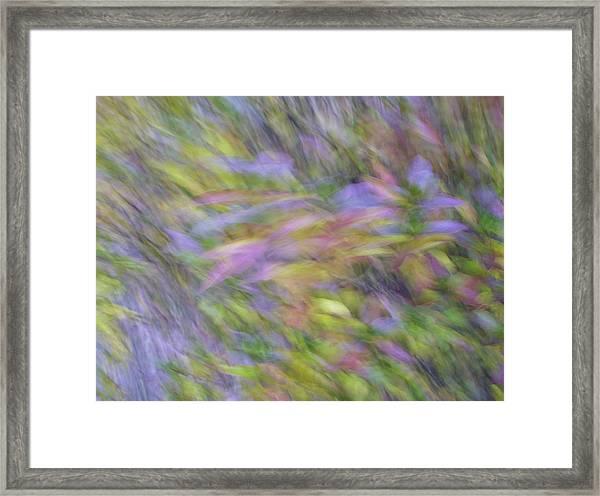 Autumn Azaleas 1 Framed Print