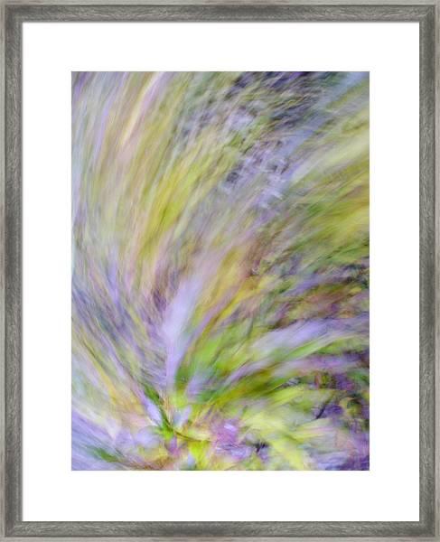 Autumn Azaleas 2 Framed Print