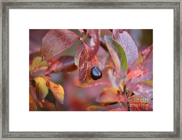 Fall Berry Framed Print