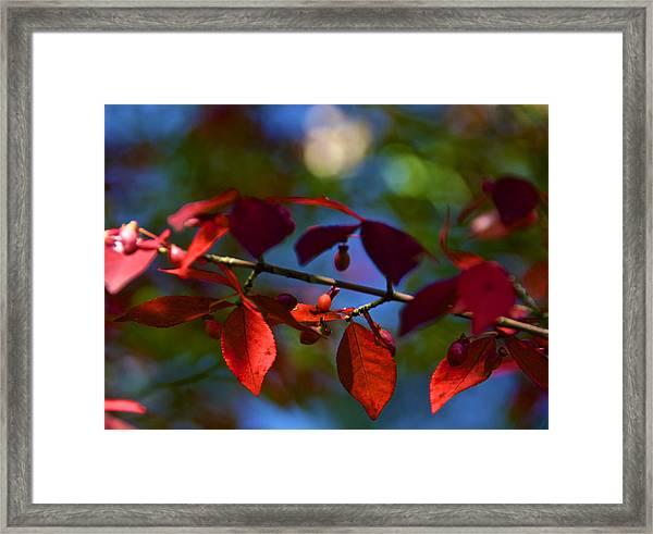 Fall Bokeh Framed Print