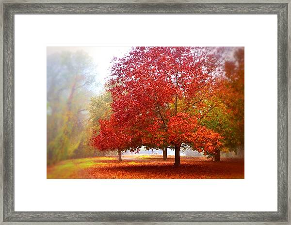 Fall Colored Trees Framed Print