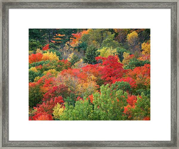 Fall Colours In Gatineau Park Quebec Framed Print