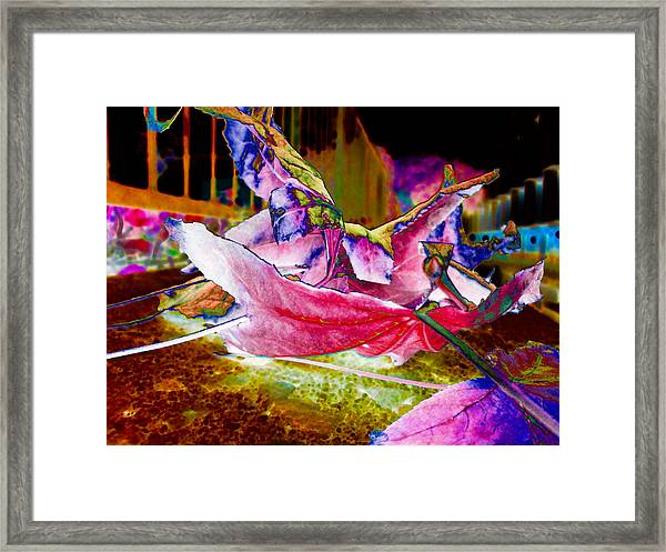 fall composition in spring v2 CSULA Framed Print