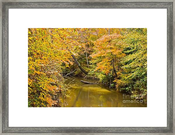 Fall Creek Foliage Framed Print
